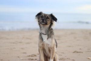chien dressage éducation positive dog training agility enteteatruffe éducateur canin dresseur