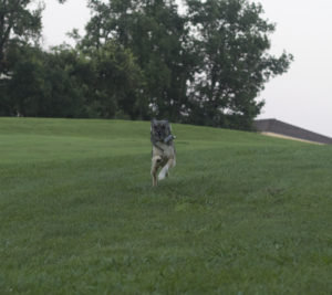 gps weenect chien perdu
