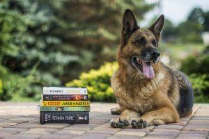 entraînement education canine cours dressage