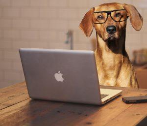 entraînement education canine cours dressage a distance
