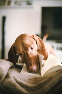 lecture chien dog book